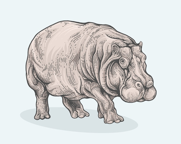 Hippopotamus walking in hand drawing