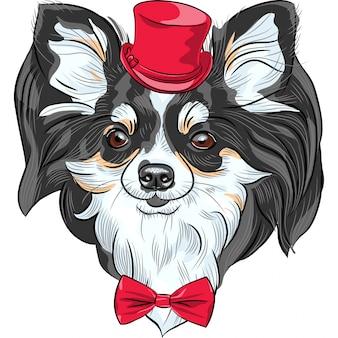 Хипстерская собака породы чихуахуа улыбается