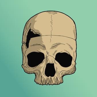 穴の頭蓋骨