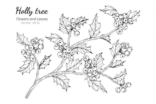 Иллюстрация чертежа падуба и ягоды с линией искусством на белых предпосылках.