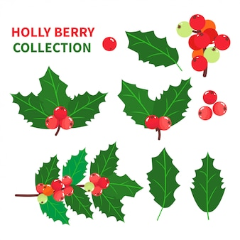Holly berry collection