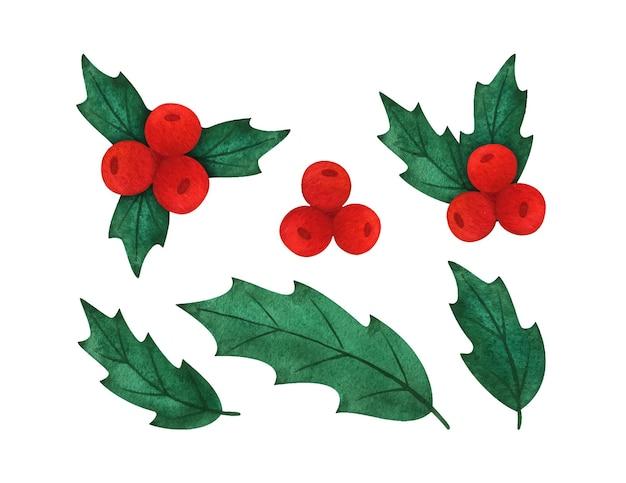ヒイラギの葉とベリー。クリスマスの植物の水彩イラストのセットです。はがき、版画、クリップアートの植物要素