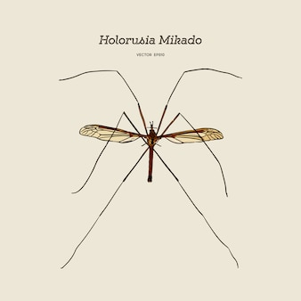 Holorusia mikado, genus of largest true crane fly. hand draw sketch vector. insect
