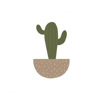 Home cactus