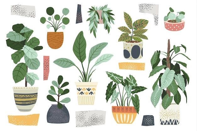 家の装飾屋内植物コレクション