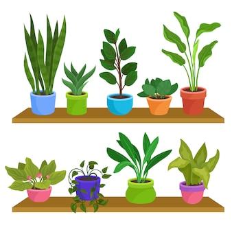 Домашние декоративные растения набор, комнатные растения для интерьера иллюстрации на белом фоне