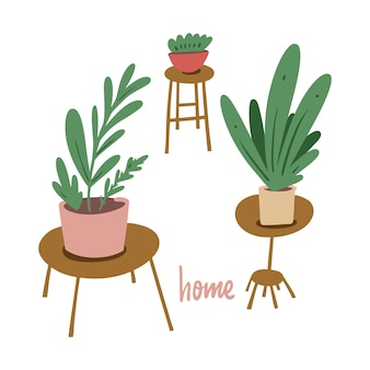 Home flowers in pots. room green decor.  illustration. isolated on white background.