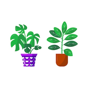 Home garden. collection of colored flower botanical, bright flowerpot. set of house plant with leaves, rubber plant ficus herb. isolated elements on white background. flat vector illustration