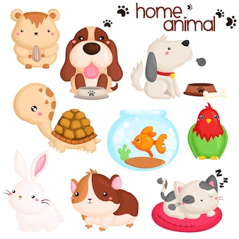 Home pet animals