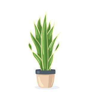 Домашнее растение в цветочном горшке на белом фоне в плоском стиле