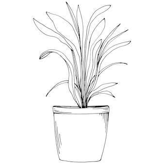 ポット スケッチのホーム プラント。家やオフィスのインテリア用に吊るされた植物で花を育てる孤立したイラストを描きます。の花の。
