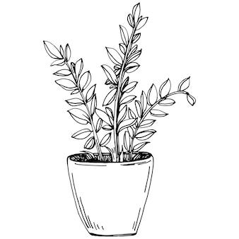 Домашнее растение в горшках, эскиз. наброски рисунок изолированных иллюстрация выращивания цветов в подвесном растении для украшения интерьера дома или офиса. вектор садовых цветов.