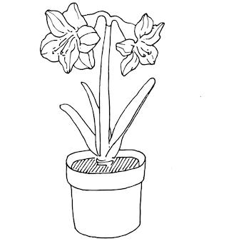 Домашнее растение в горшках, эскиз. наброски рисунок изолированных иллюстрация выращивания цветов в висящем заводе для украшения интерьера дома или офиса. вектор садовых цветов.