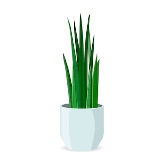 Home plant in pot flat isolated. decorative indoor