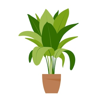 Home plant. potted plant isolated on white. flat. vector illustration.