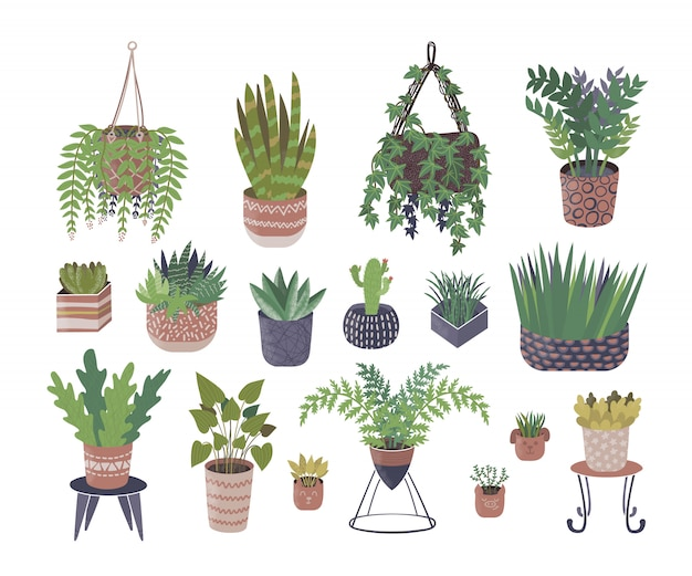 Home plants in flower pots illustration isolated set collection.