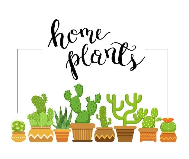 냄비에 홈 선인장으로 액자 집 식물. 냄비, 실내 화분 즙이 많은 선인장에 자연 녹색 식물