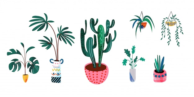 Home plants in pots, set isolated objects