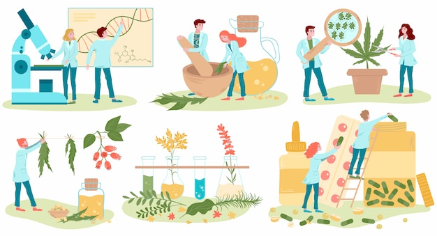 Homeopathy and natural alternative medicine, herbal medical treatment and homeopaths medics set of flat isolated on white  illustrations.