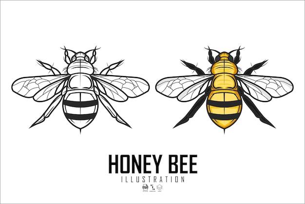 Иллюстрация медовой пчелы на белом фоне
