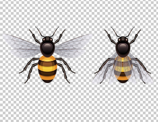 Honey bee isolated from background top view