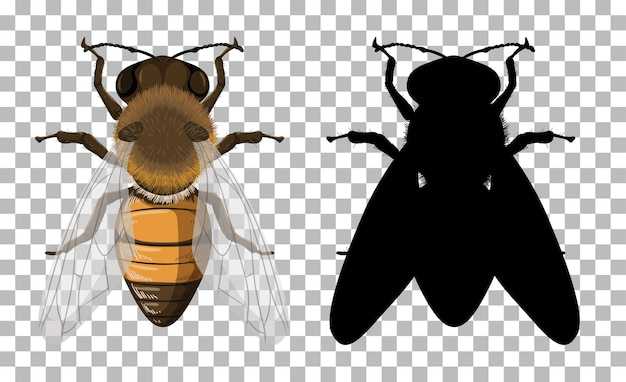 Honey bee with its silhouette on transparent background