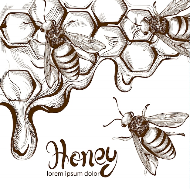 Honey bees combs line art