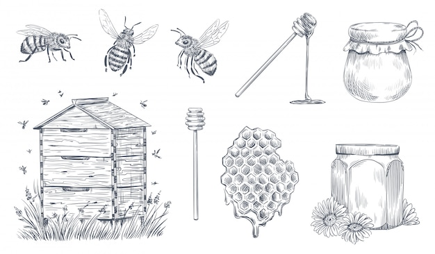 Honey bees engraving. hand drawn beekeeping, vintage honey farm and honeyed bee pollen vector illustration set