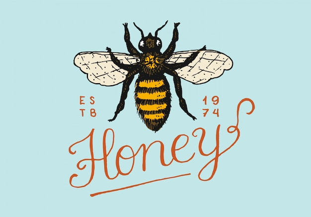 Honey and bees. vintage logo for typography, shop or signboards.