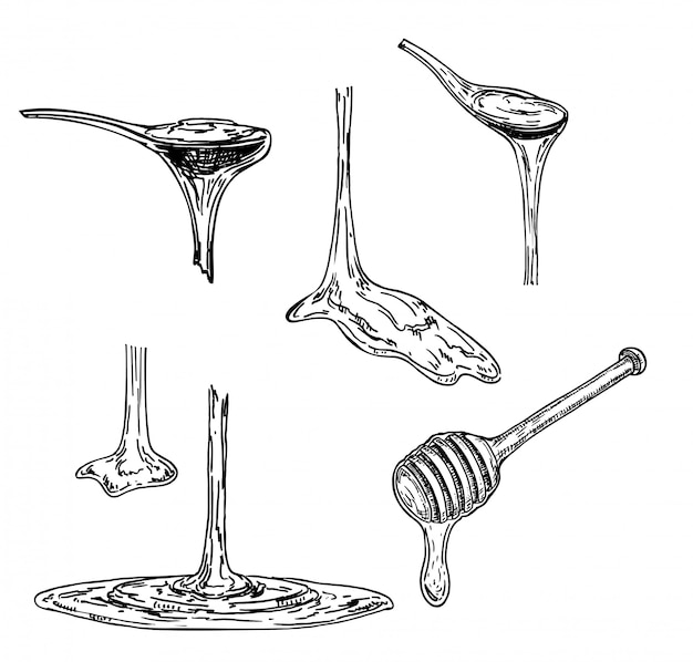 Honey or maple syrup drains from a spoon. sketch. viscous substance dripping from a spoon.  illustration on white background.