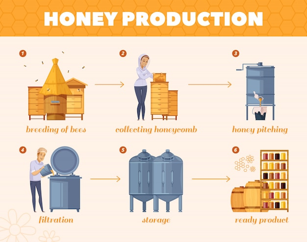 Honey production process cartoon flowchart