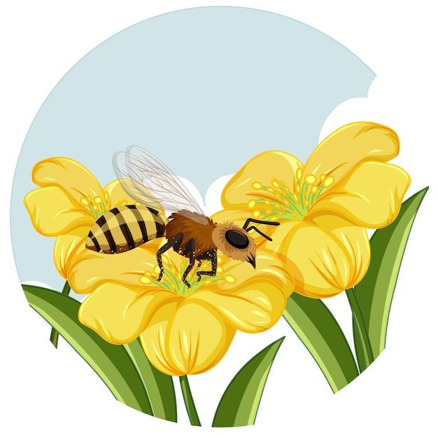 白い背景の上の黄色い花のミツバチ