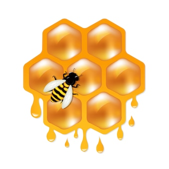 Honeycombs with bee