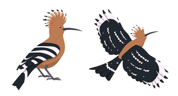 Hoopoes in different poses flying and sitting