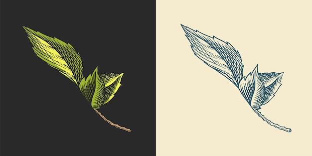 Винтажный набор с гравировкой на листьях хмеля для солодового пива