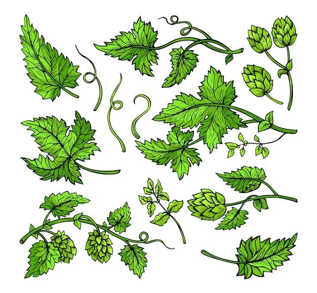 Хмель ветка растения листья эскиз травы зеленый набор