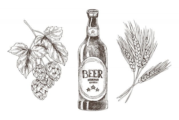 Hop and wheat bunches isolated beer ingredients