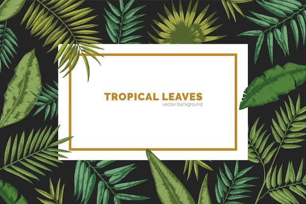 이국적인 야자수 가지, monstera 및 바나나 잎으로 만든 프레임으로 장식 된 가로 배경