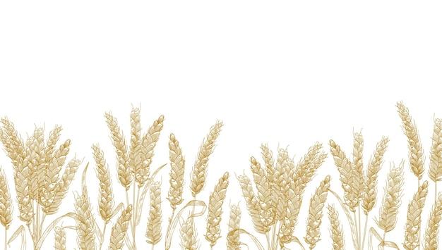 Горизонтальный фон с колосьями пшеницы у нижнего края