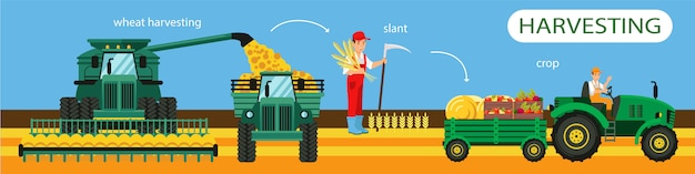 Horizontal flat banner wheat harvesting slant crop