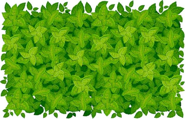 Горизонтальный узор из зеленых листьев. различные формы листьев деревьев и растений. цветочные элементы, листва. иллюстрация на белом фоне. страница сайта и мобильное приложение