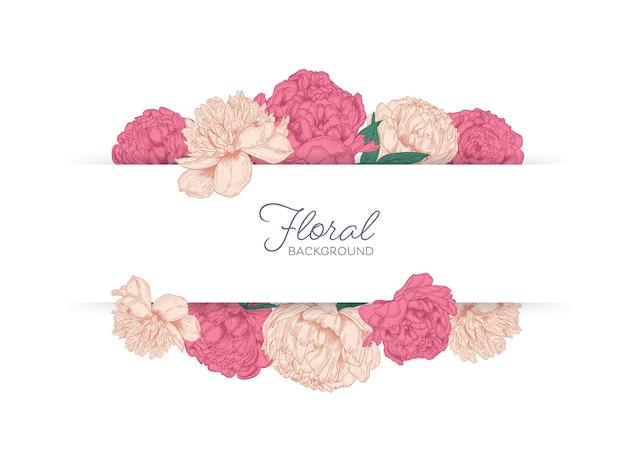 분홍색 모란 꽃 피는 정원으로 장식 된 보더