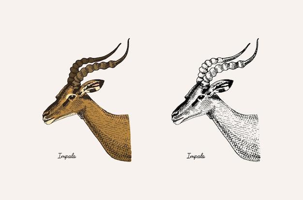Рога и рога животные газель импала и большая лань куду