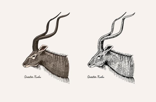角と枝角の動物インパラガゼルとクーズーのダマジカ