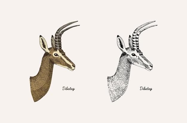뿔과 뿔 동물 임팔라 가젤과 그레이터 쿠두 휴 경지 사슴