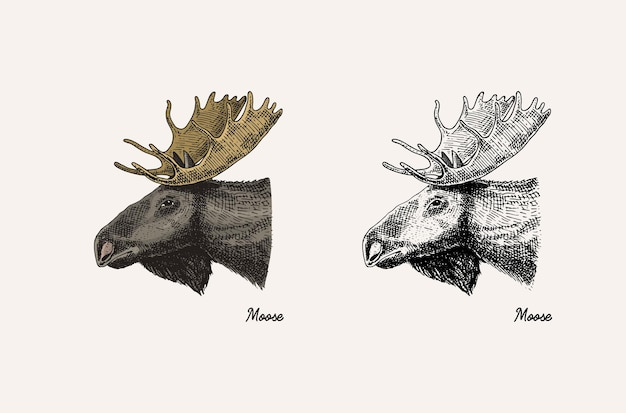 角と枝角の動物ムースまたはエルクまたは鹿の手描きの刻まれたスケッチ