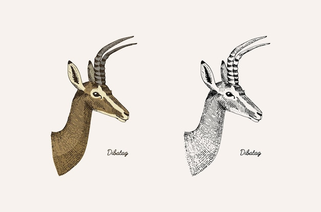 Horn and antlers animals impala gazelle and greater kudu fallow deer