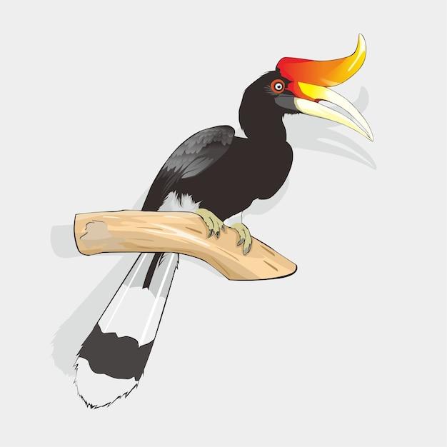 Hornbill bird vector