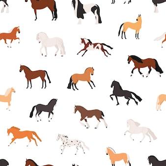 말 사육 평면 벡터 완벽 한 패턴입니다. purebreed 암말과 종마 장식 텍스처