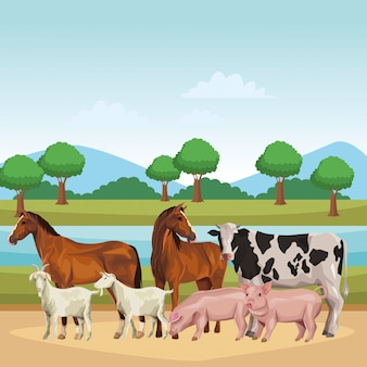 Horse cow pig and goat